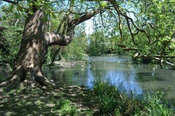 tree-and-lake